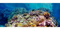 Estimating the Feeding Habits of Corals May Offer New Insights on Resilient Reefs