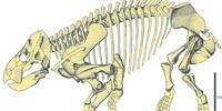 Gigantic Mammal 'Cousin' Discovered