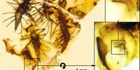 Newborn Insects Trapped in Amber Show First Fossil Evidence of How to Crack an Egg