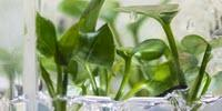 Researchers Develop a New Houseplant That Can Clean Your Home's Air