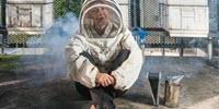 Dangerous Bee Virus Might Be Innocent Bystander