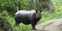 More Animal Species under Threat of Extinction