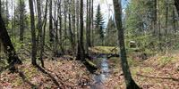 Nitrogen Pollution's Path to Streams Weaves through More Forests—and at a Faster Pace—than Suspected