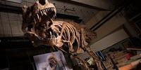 Paleontologists Report World's Biggest Tyrannosaurus Rex