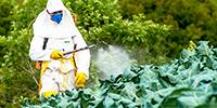 Sustainable and Natural Alternative to Man-Made Chemical Pesticides Discovered