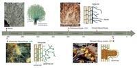 Plants, Microbes Shape Global Biomes through Local Underground Alliances