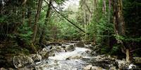 Natural Environments Favor 'Good' Bacteria