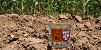 Corn Breeder Looking to Build a Better Bourbon