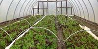 High Tunnels for Specialty Crops: The Hope and the Hindrance