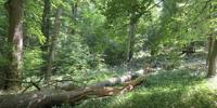 Talking to Each Other - How Forest Conservation Can Succeed