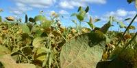 Complete Genome of Devastating Soybean Pathogen Assembled