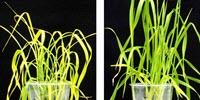 Game Changer: New Chemical Keeps Plants Plump