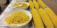 Sweet Corn Growers, Processors Could Dramatically Increase Yield, Profit