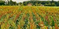AI for Plant Breeding in an Ever-Changing Climate