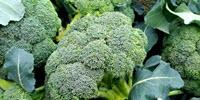 'Locally Grown' Broccoli Looks, Tastes Better to Consumers